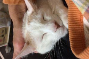 猫の気持ちよさような顔